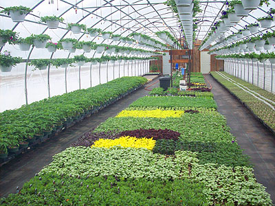 Locally Grown Plants Vegetables And Flowers At Owens Garden Center Landscaping