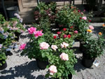 Owens Garden Center Flowers & Plants